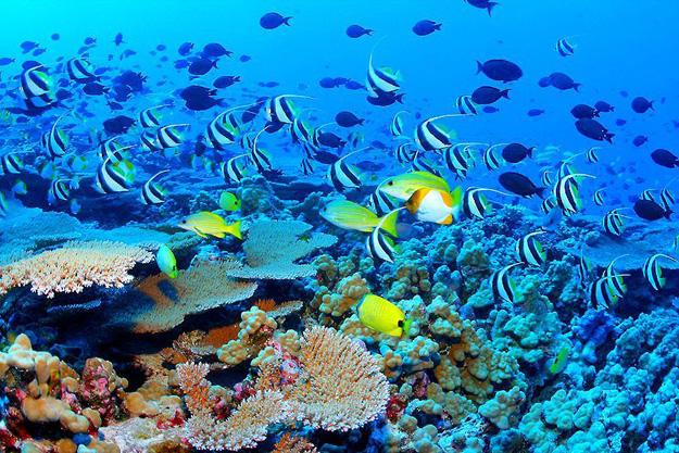 the-great-barrier-reef-queensland-australia