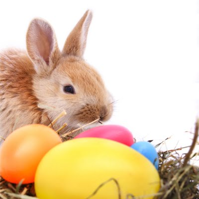 easter bunny3